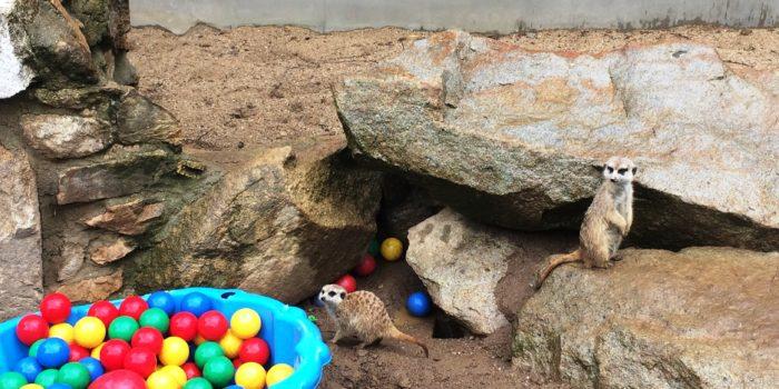 Za Zvířátky Do Zooparku Na Hrádečku